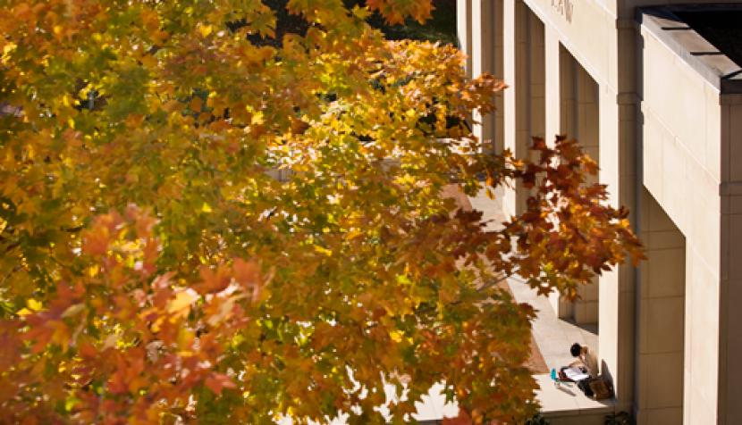 Fall leaves and the front view of UVA Law