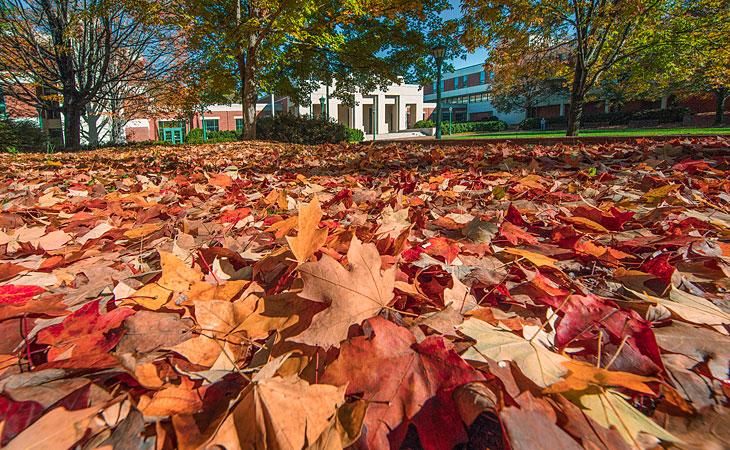 Leaves in front of the school
