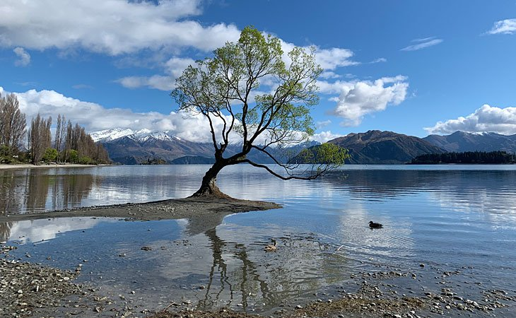 A tree in Wanaka, New Zealand