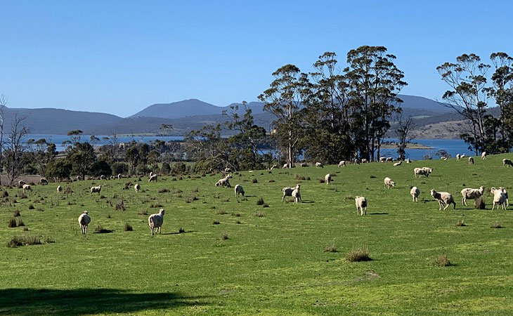 Scenery driving in Tasmania