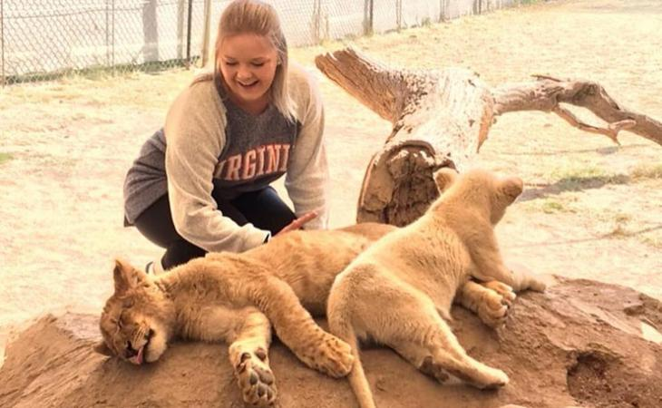 Swann with lion cubs